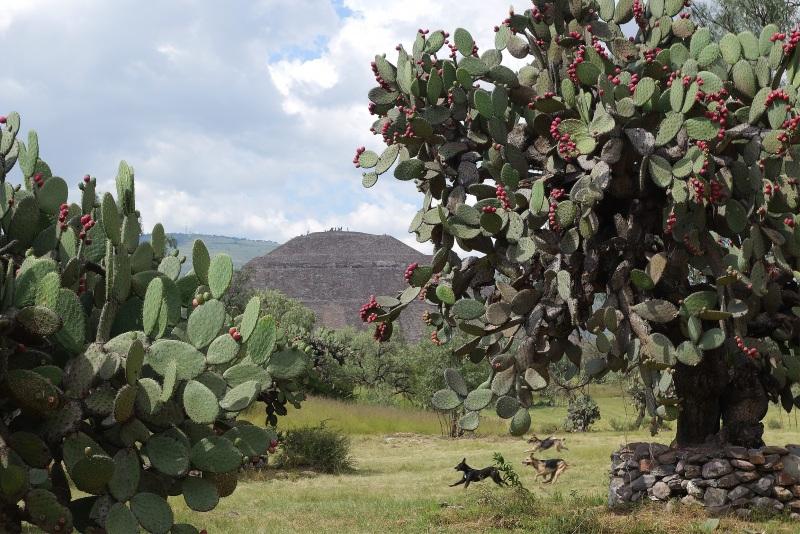 Canes Teotihuacanos